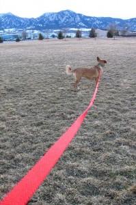 Le chien tenu par sa corde